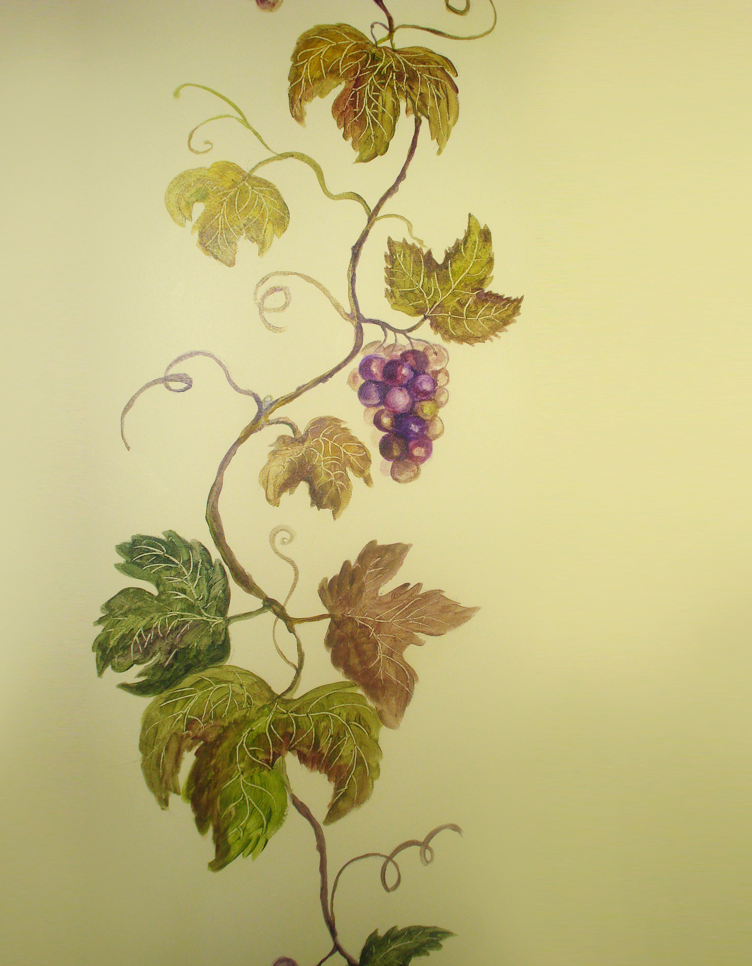 ilonaracina.com — portfolio » Grapes
